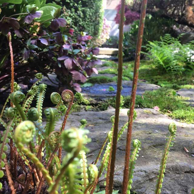 landscaping services design companion planting
