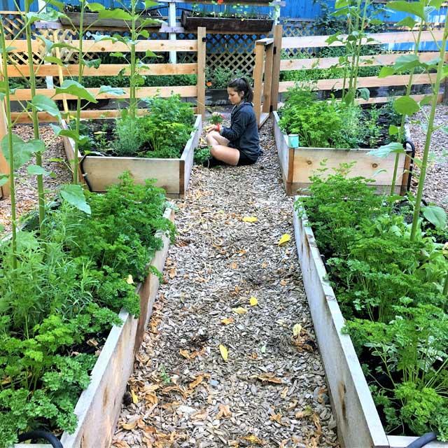 landscaping services design veggie herb beds